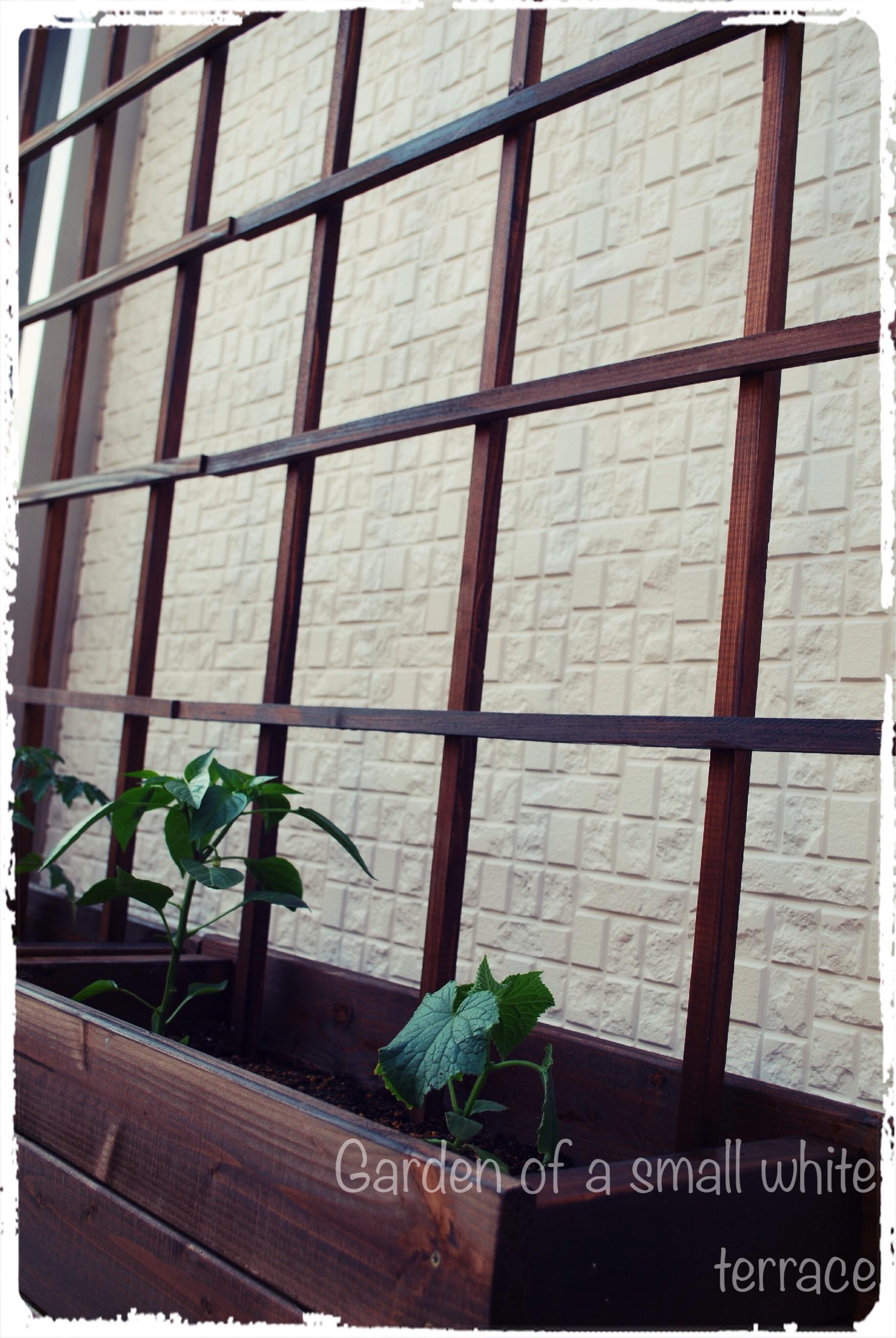 家庭菜園 トレリスDIY