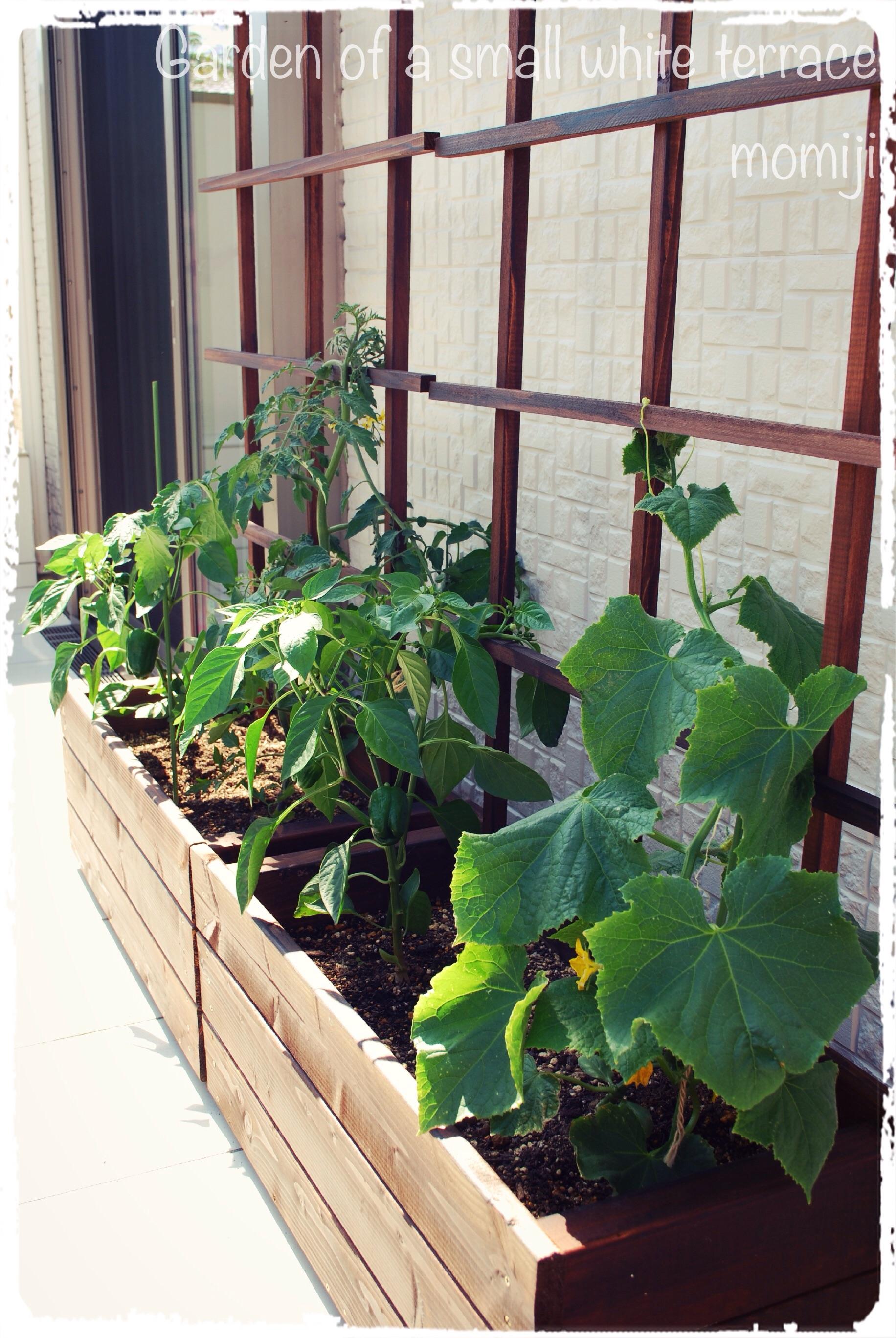 木製プランター 家庭菜園