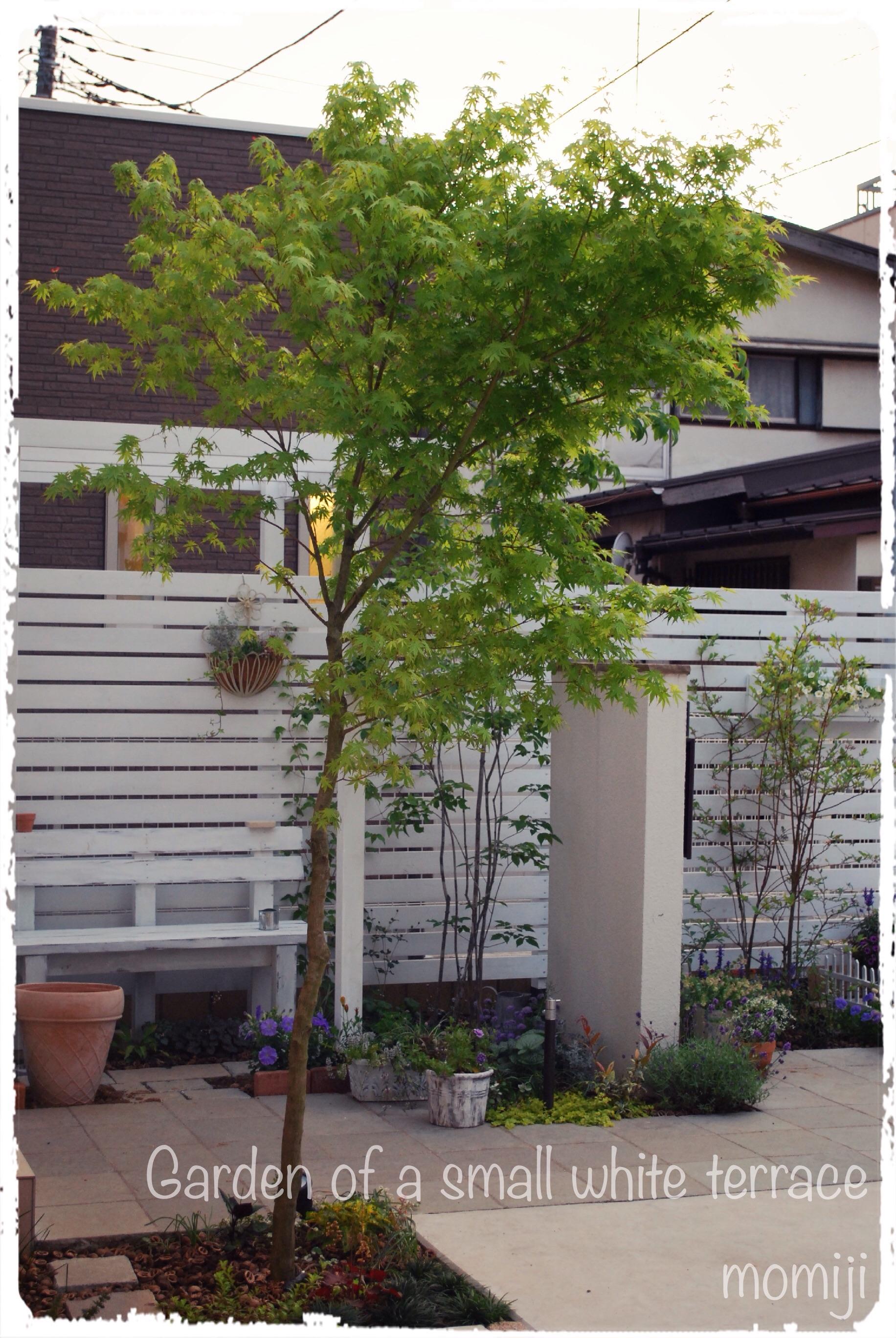 玄関アプローチ 植栽
