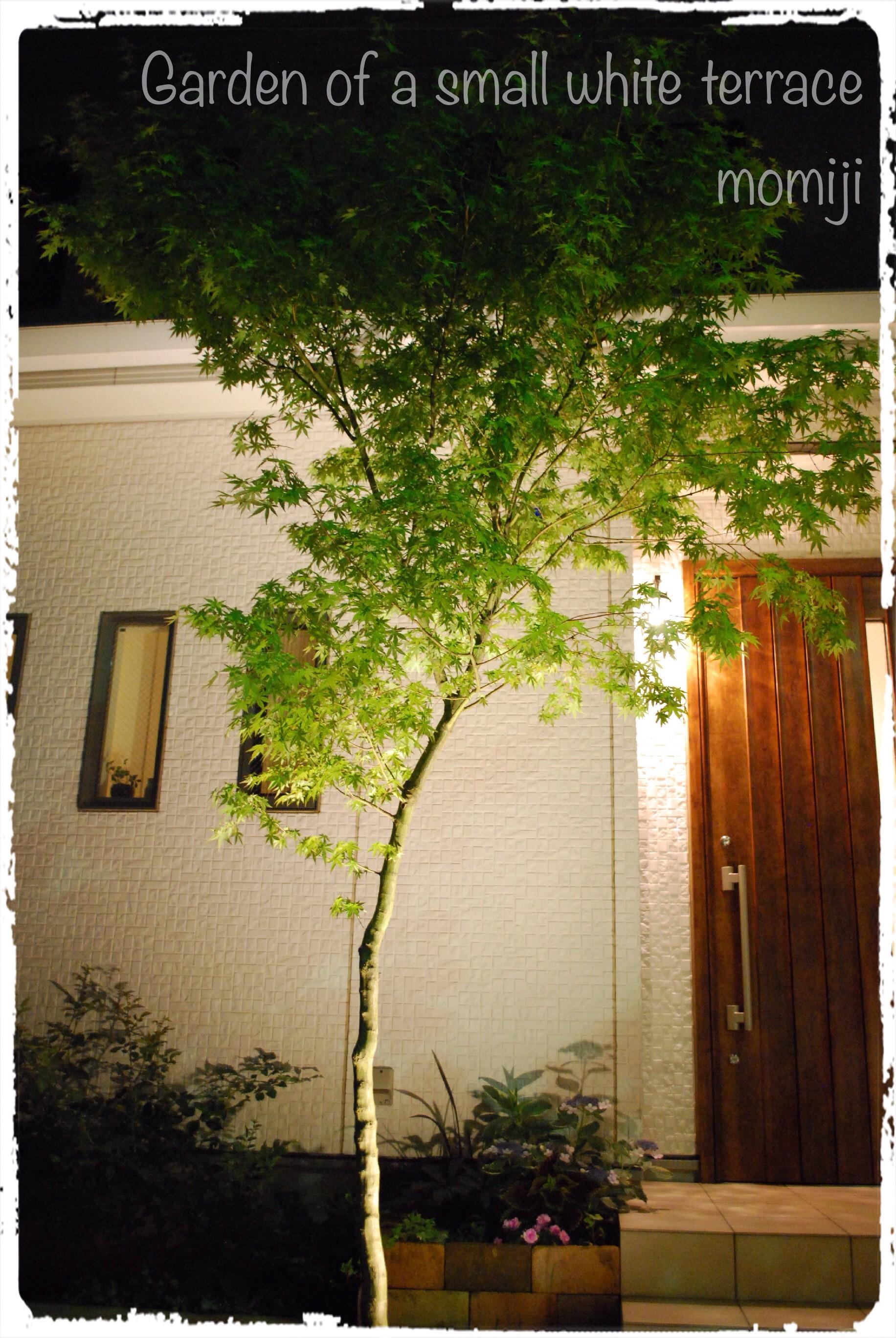 玄関アプローチ ライトアップ