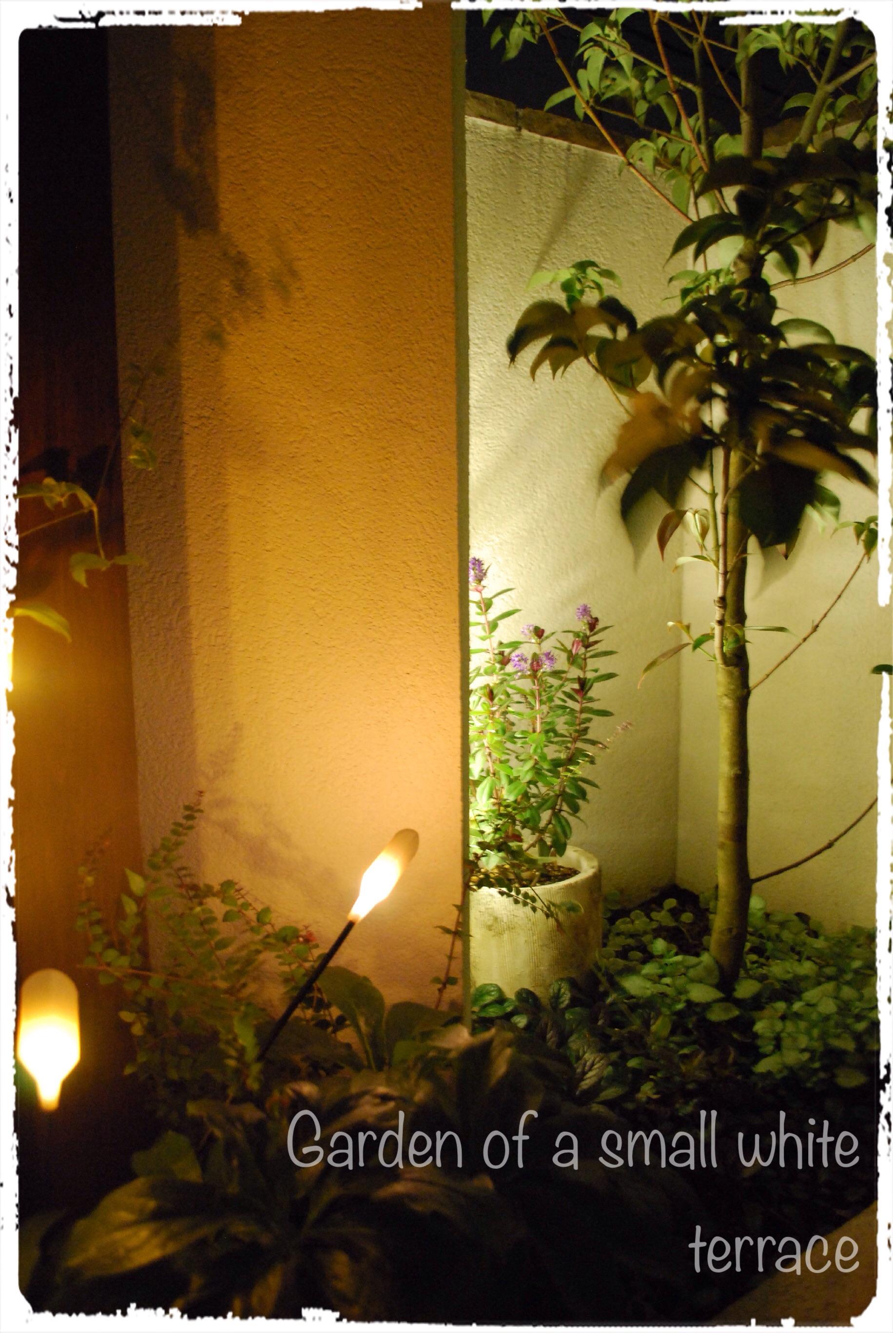 秘密の庭 ライトアップ