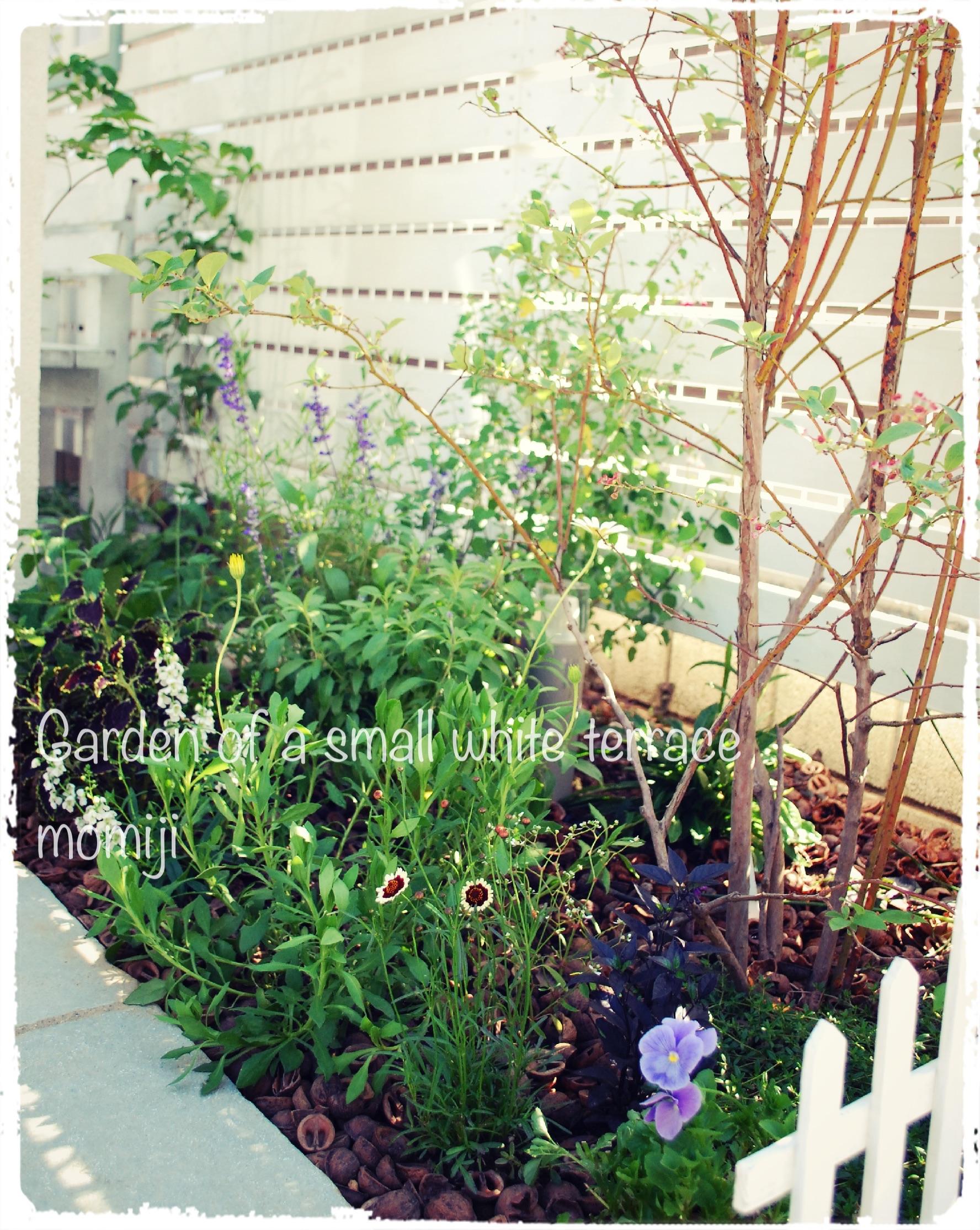 玄関アプローチ 植栽 夏花壇