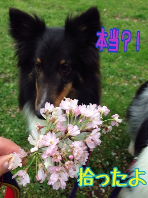 fc2blog_2015041820004404d.jpg