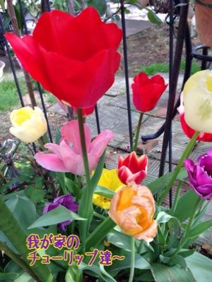 fc2blog_201504202102287ec.jpg