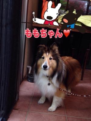 fc2blog_2015042119484398b.jpg