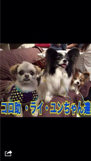 fc2blog_20150519200422ad9.jpg