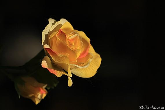 造花・バラ