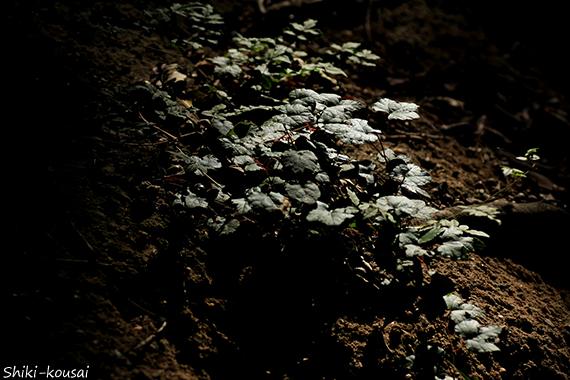 木漏れ日と反射光