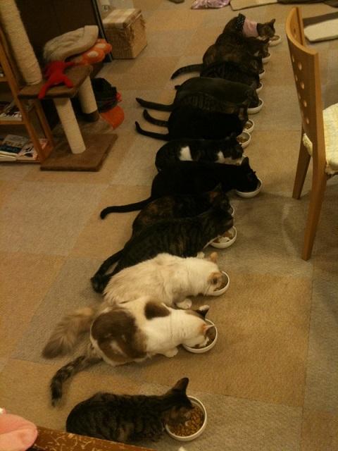 猫の食事&岡山弁