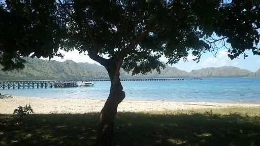 DSC_0033komodo island