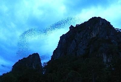 群れ飛ぶコウモリ