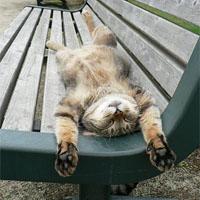 仮眠をとる猫