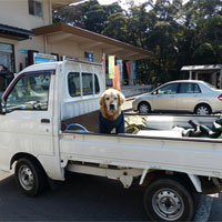 トラックの荷台に乗る犬