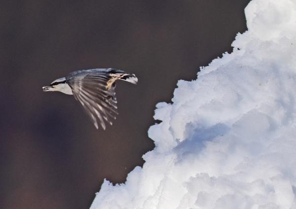 ゴジュウカラ雪6 -223