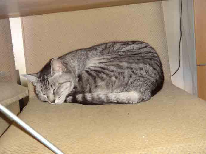 我が家の眠り猫