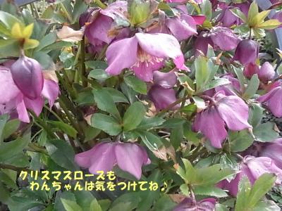 150309-9.jpg