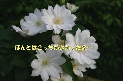 150510-2.jpg