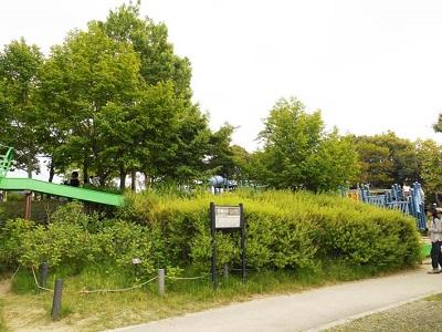 竹取公園1