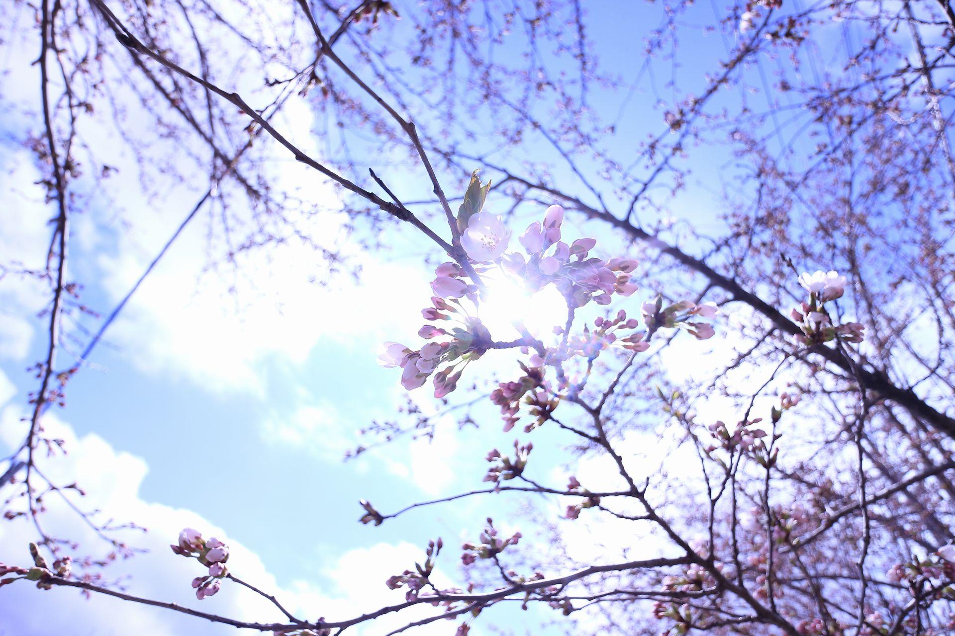 田子町地域おこし協力隊つっちーのブログ2015041603