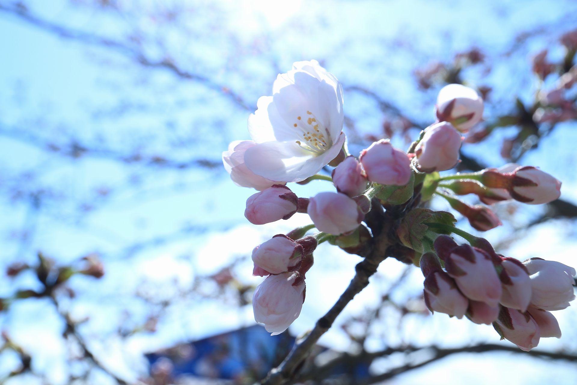 田子町地域おこし協力隊つっちーのブログ2015041606