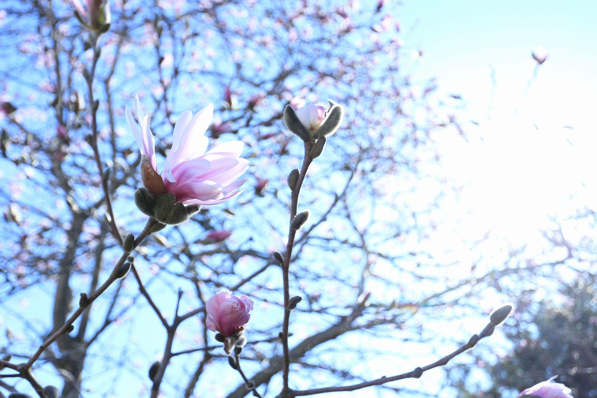 田子町地域おこし協力隊つっちーのブログ2015041607