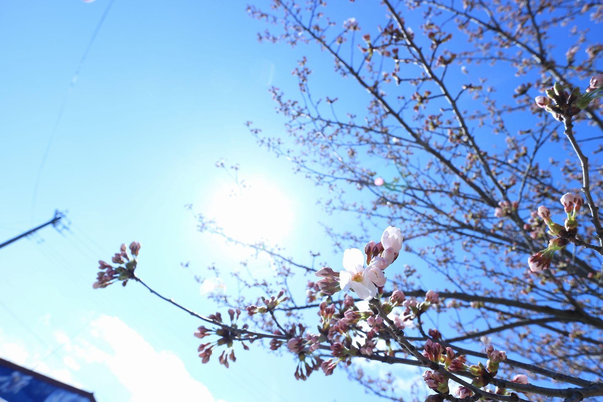 田子町地域おこし協力隊つっちーのブログ2015041608