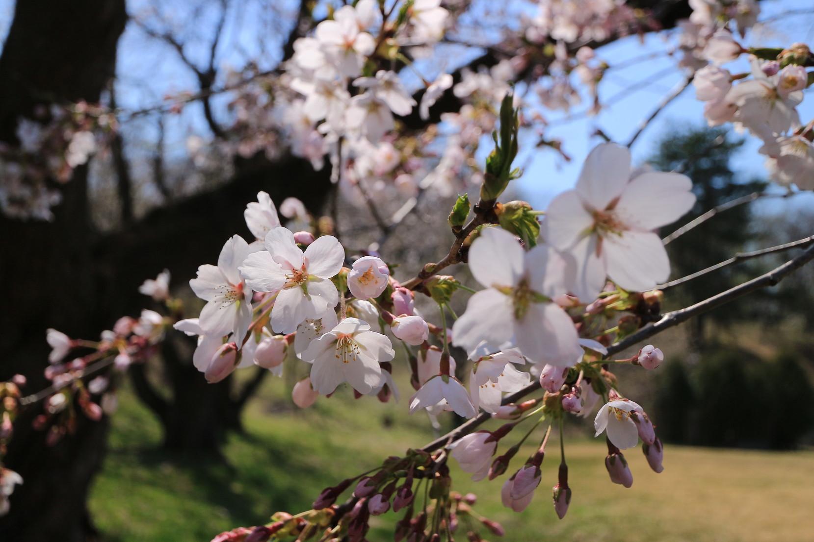 田子町地域おこし協力隊20150423_002