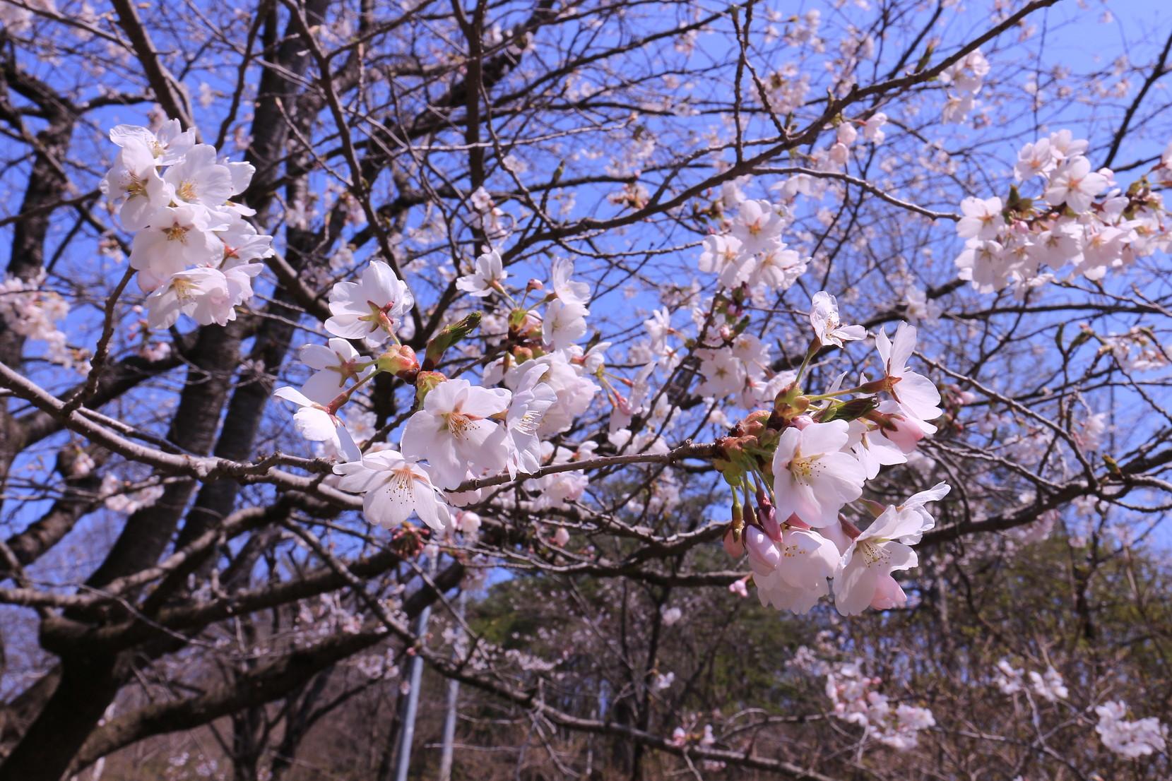 田子町地域おこし協力隊20150423_003