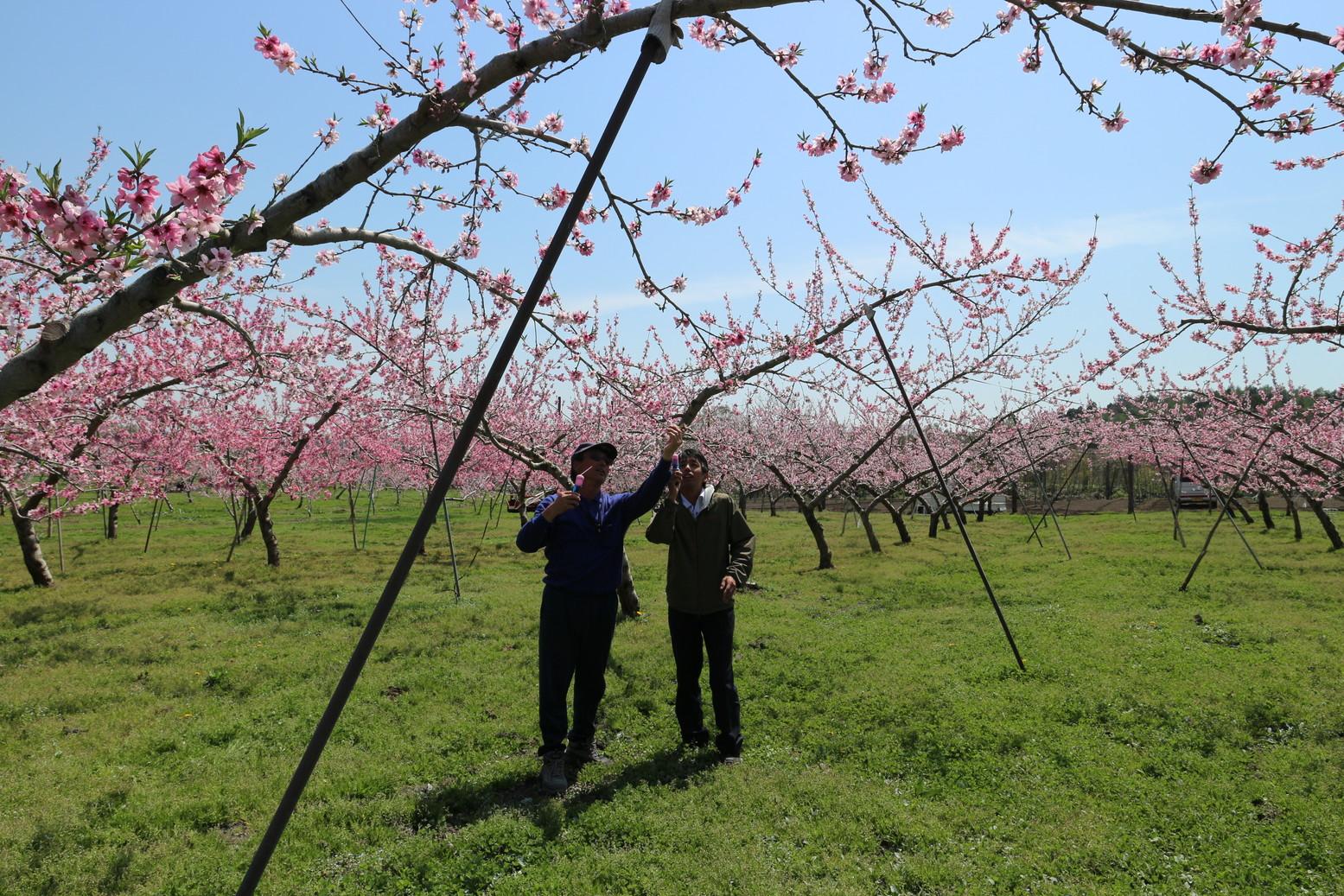 田子町地域おこし協力隊つっちーのブログ20150430_002