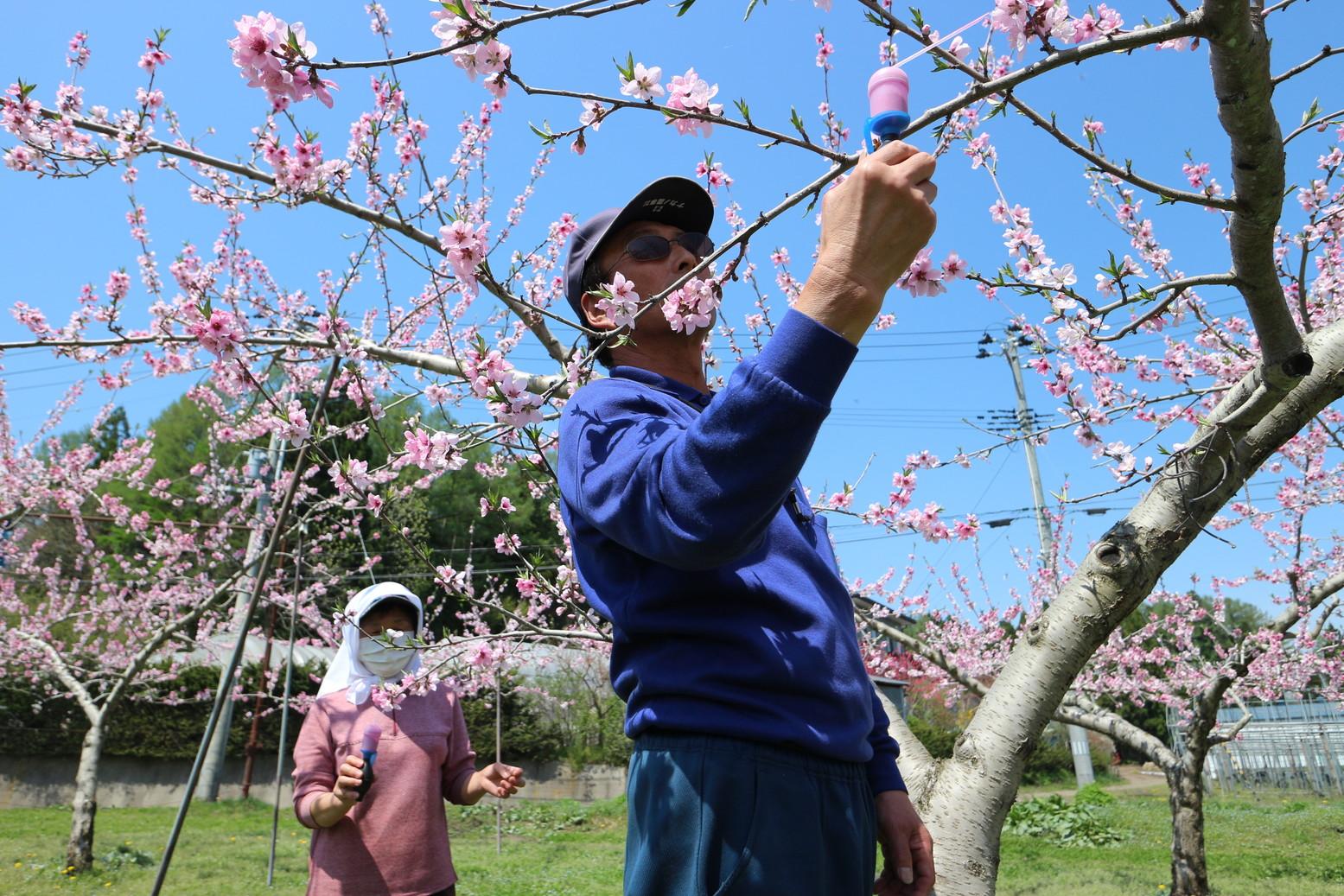 田子町地域おこし協力隊つっちーのブログ20150430_003