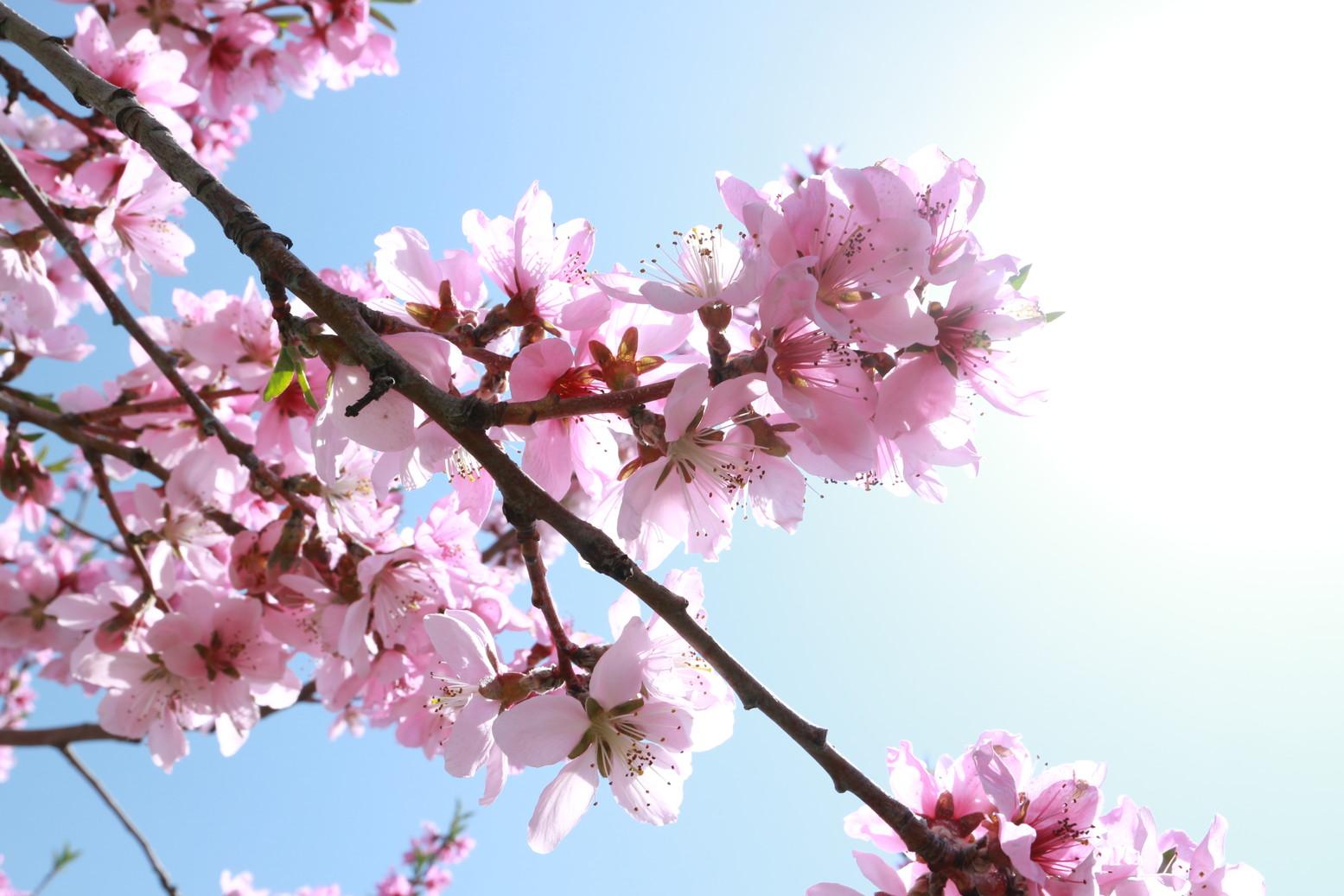 田子町地域おこし協力隊つっちーのブログ20150430_004