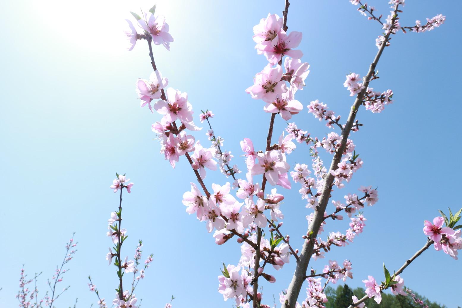 田子町地域おこし協力隊つっちーのブログ20150430_006