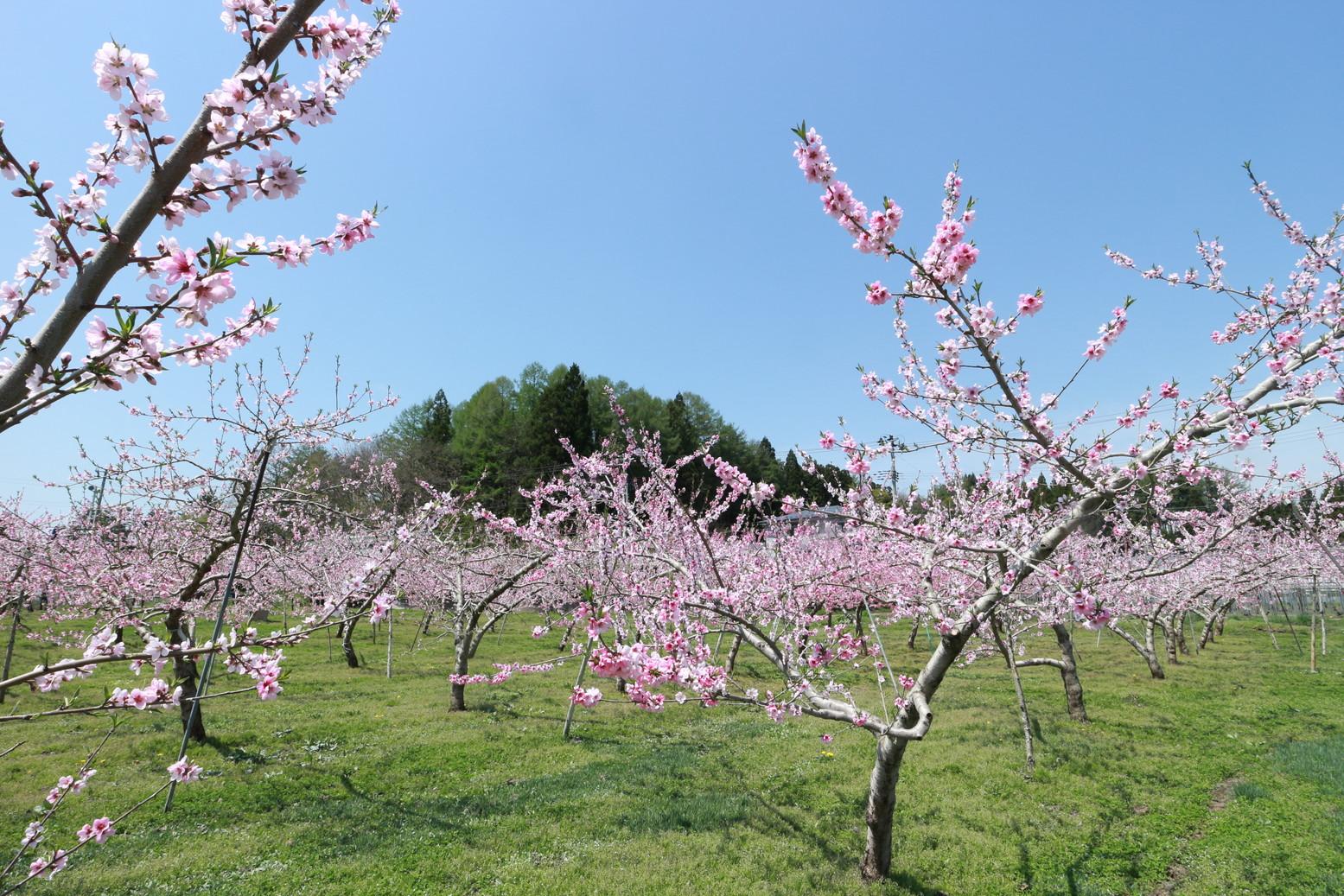 田子町地域おこし協力隊つっちーのブログ20150430_007