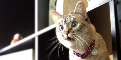 o-CATS-facebook.jpg