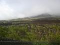 溶岩の上にも草木が