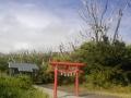 神社の大木が再生