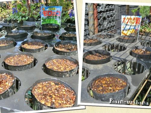 モロッコ豆&ホクホク栗味(かぼちゃ)
