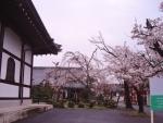 お寺の境内にある桜