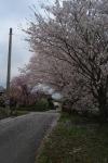 美濃加茂市下米田 の個人のお宅の庭