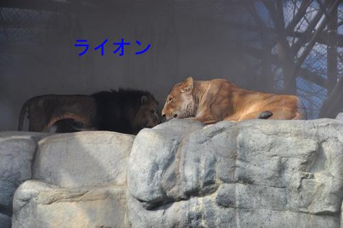 16ライオン