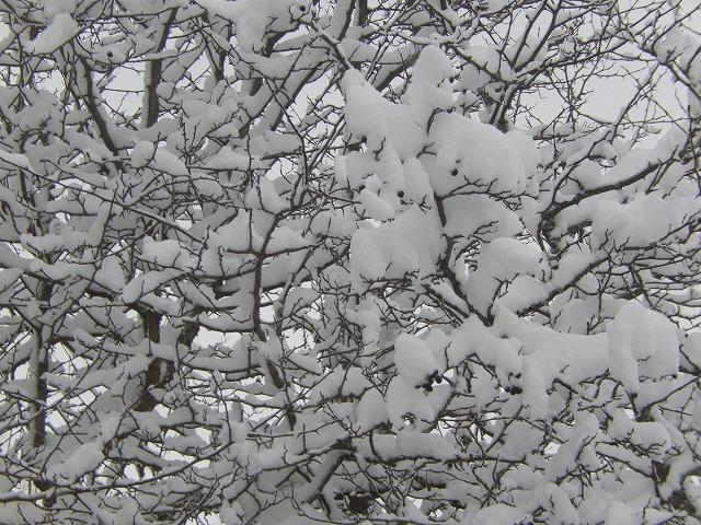 モコモコの木2