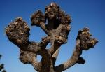 1樹木の切瘤-13D 1501qtc