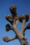 2樹木の切瘤-09D 1501q