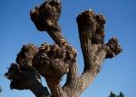 3樹木の切瘤-12D 1501qtc
