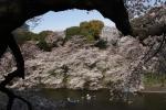 3.皇居の花見:千鳥ヶ淵-07D 1104q