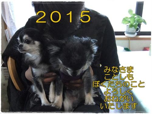 2014_1227グッピー&チコ0015