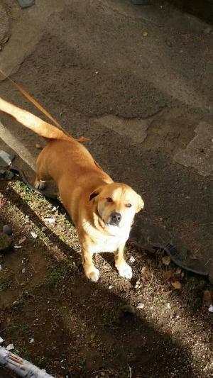 迷子犬ブーIMG_0495_convert_20150223112503