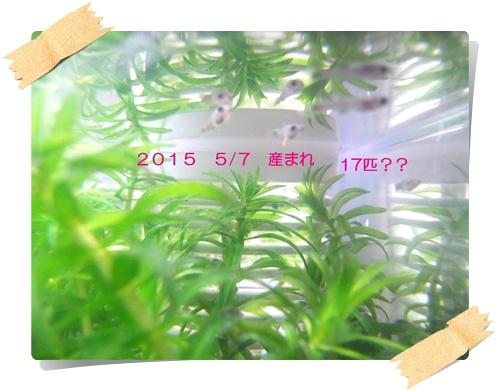 2015_0527産仔タァなど0009