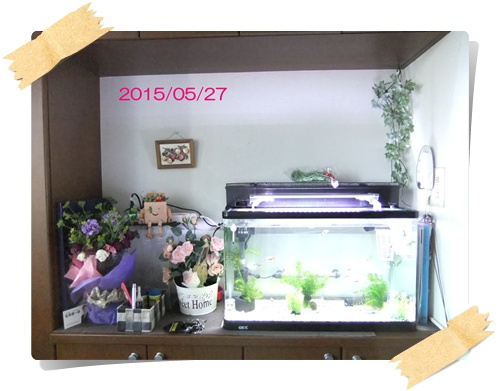 2015_0527産仔タァなど0017