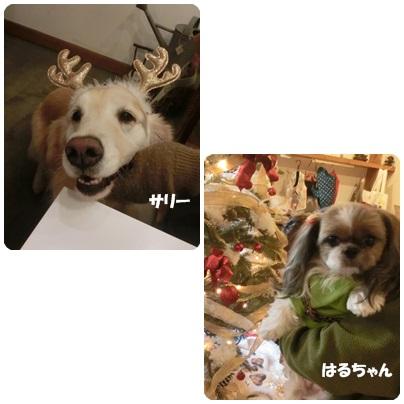 2014-12-117.jpg